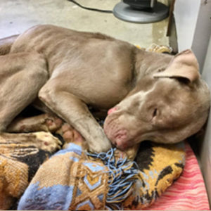 Mistreated - Before Rescue